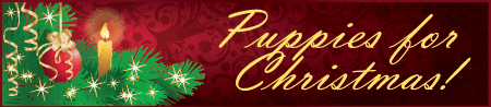 xmas_banners3